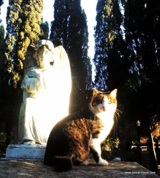 protestant cemetery in testaccio, rome