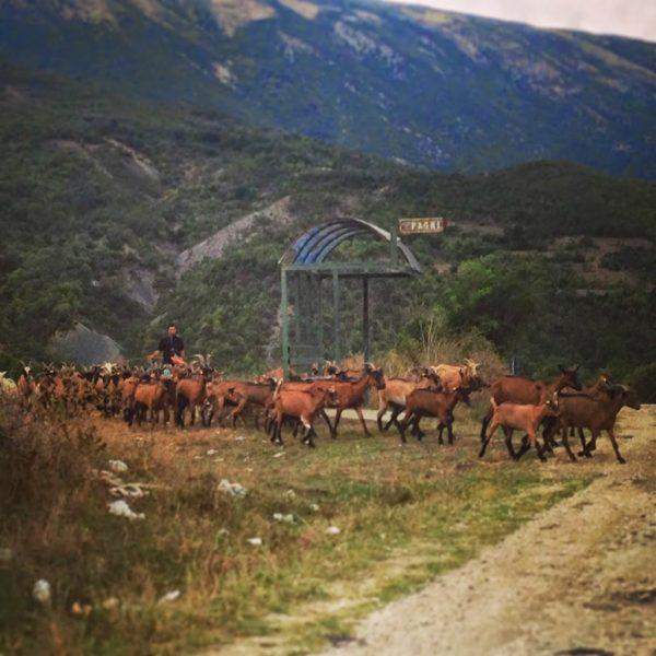 Kelcyre, Albania