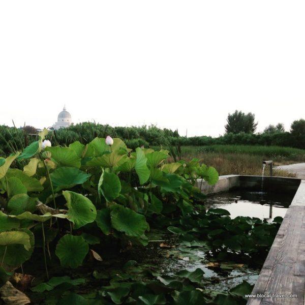 lotus flower magliana park roma