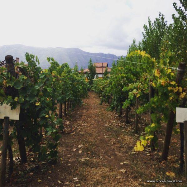 didactic vineyard antica masseria venditti