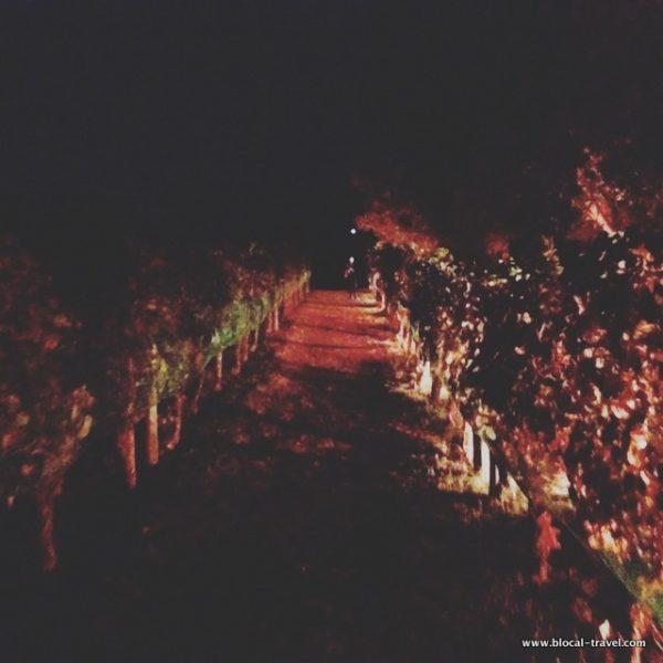 foro boario wine villa dei misteri pompei