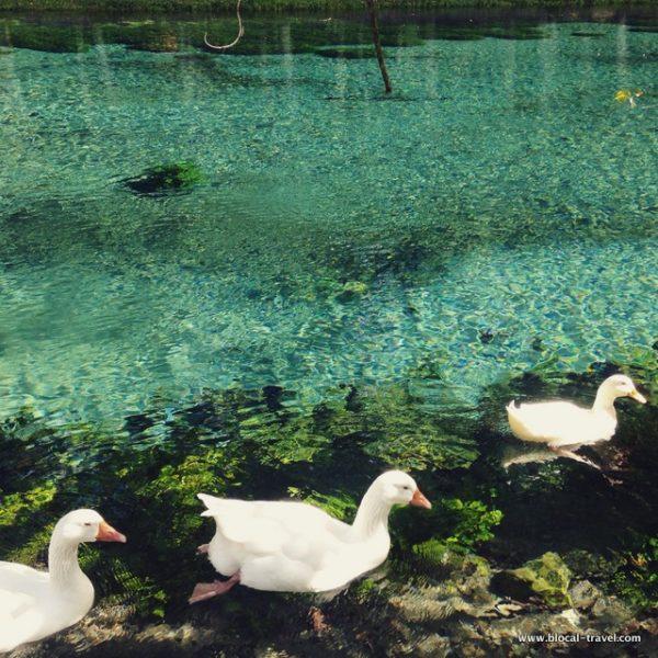 grassano natural park benevento campania italy