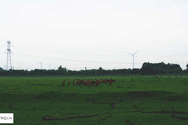 Oostvaardersplassen Natural Park