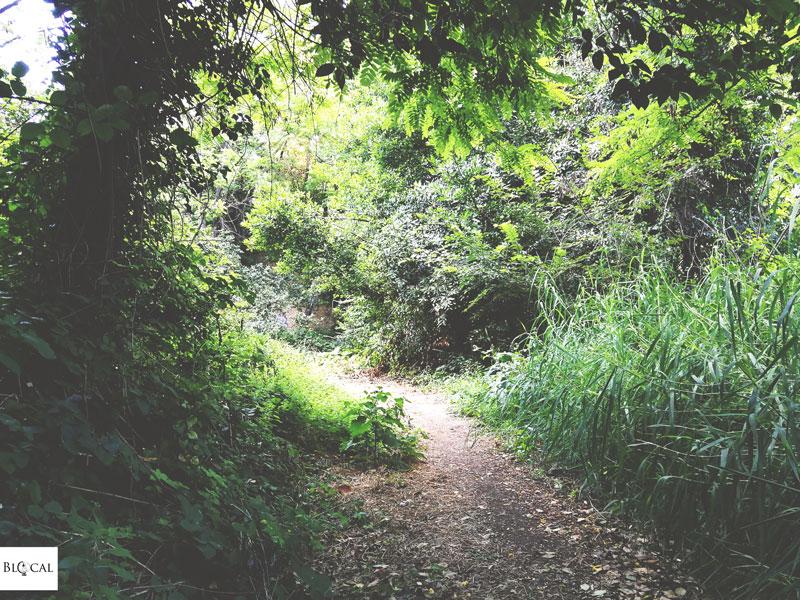 hiking monte mario Roma