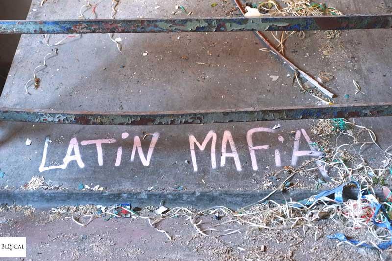 latin mafia ibug festival