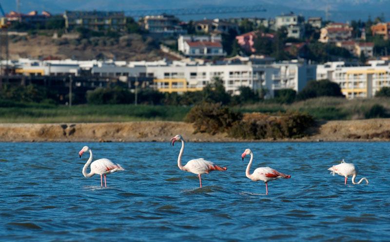 pink flamingos cagliari